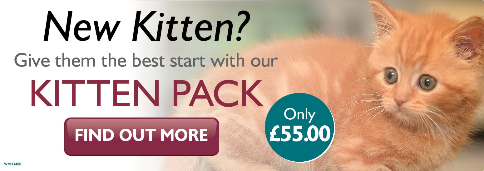 Kitten Pack including kitten injections, flea & worm treatment and much more from Bridgefoot Vets in Warrington